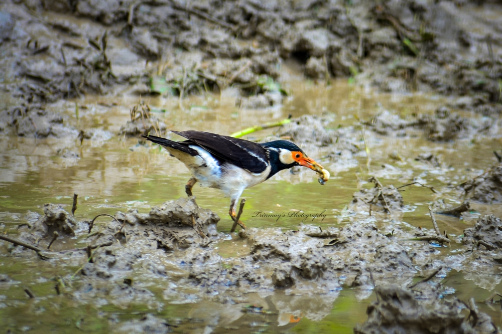 Bird Catching a Insect, #birds #wildlife, #Nature #background #wallpaper #hdclicks #fullHD, #Nature #background #wallpaper #hdclicks #fullHD#fksayyad @Trinmay, #birdeat