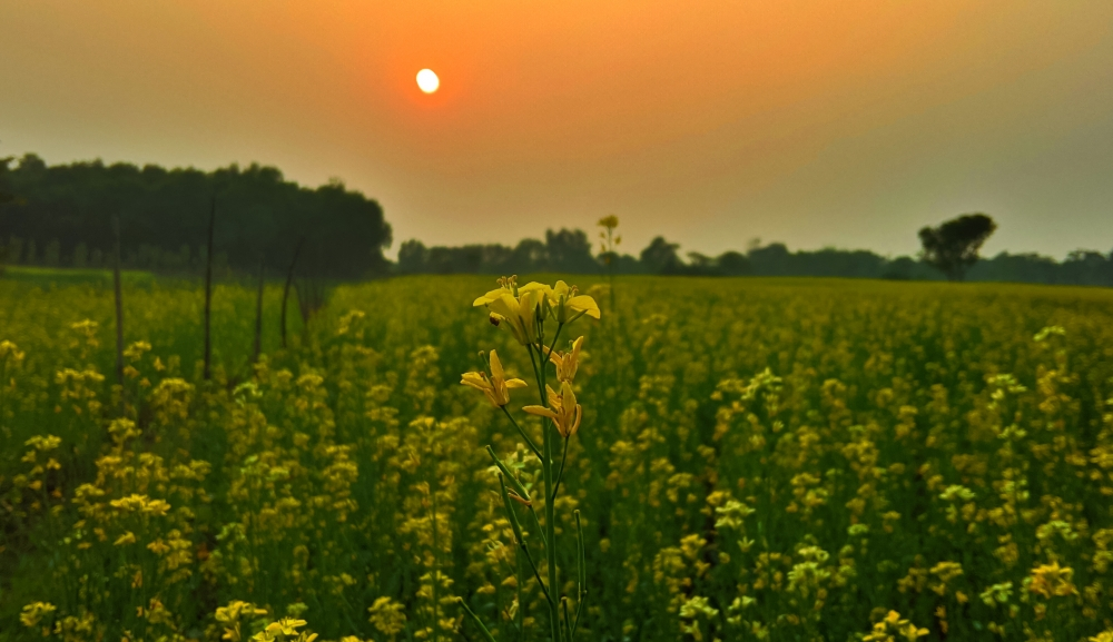 Sunflower Garden , #nature #photography #love #instagood #photooftheday #travel #sky #beautiful #art #naturephotography #like #landscape #sunset #photo #picoftheday #instagram #sun #beach #life #winter #sea #fun #cute #clouds #happy #naturelovers #summer #bhfyp, #flower #sunflower #beautiful #yellow #nature #photography,