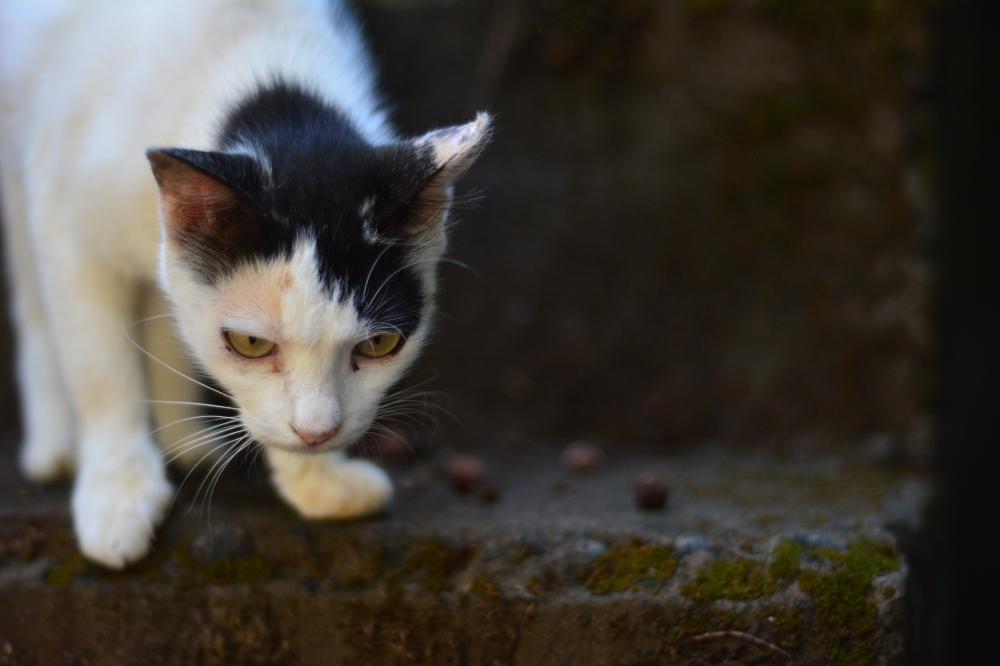 Cat looking, cat, Animal, pet,