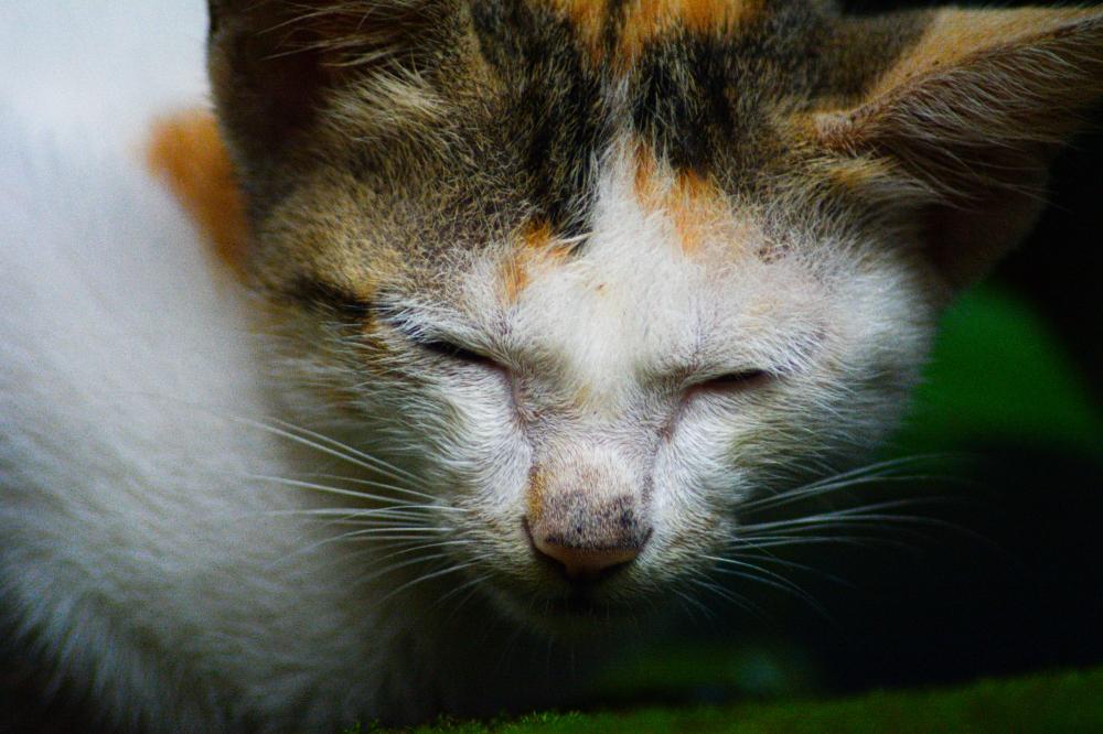 Cat sleeping, Cat, Kitten,