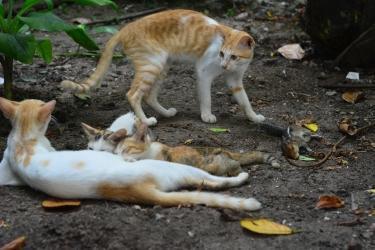 Cat hunt squirrel