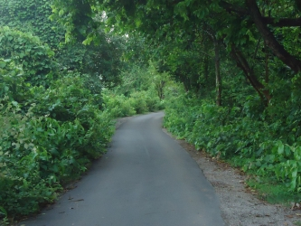 jungle side