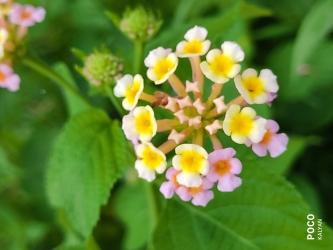 Jungly flower